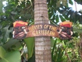Pirates Of The Caribbean Pirate Sign 24 Pirate Decor