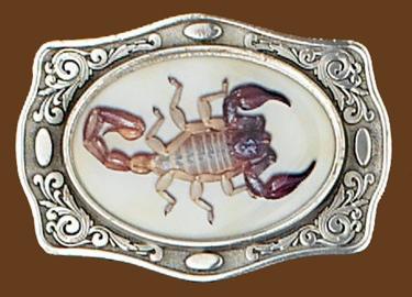 Scorpion Belt Buckle - 3-3/4 x 2-3/4