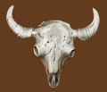 Buffalo Skull Belt Buckle 3-3/8 x 2-7/8