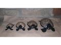 Set Of 4 Wooden Turtles Designer Turtle W Eggshells